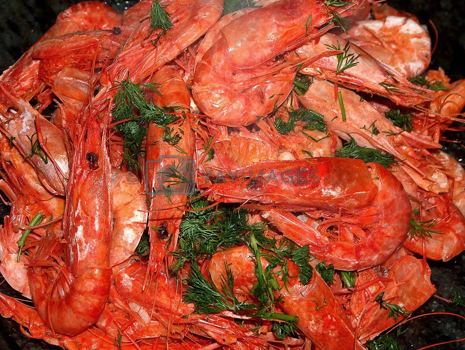 big red Mediterranean shrimps topped with fresh herbs