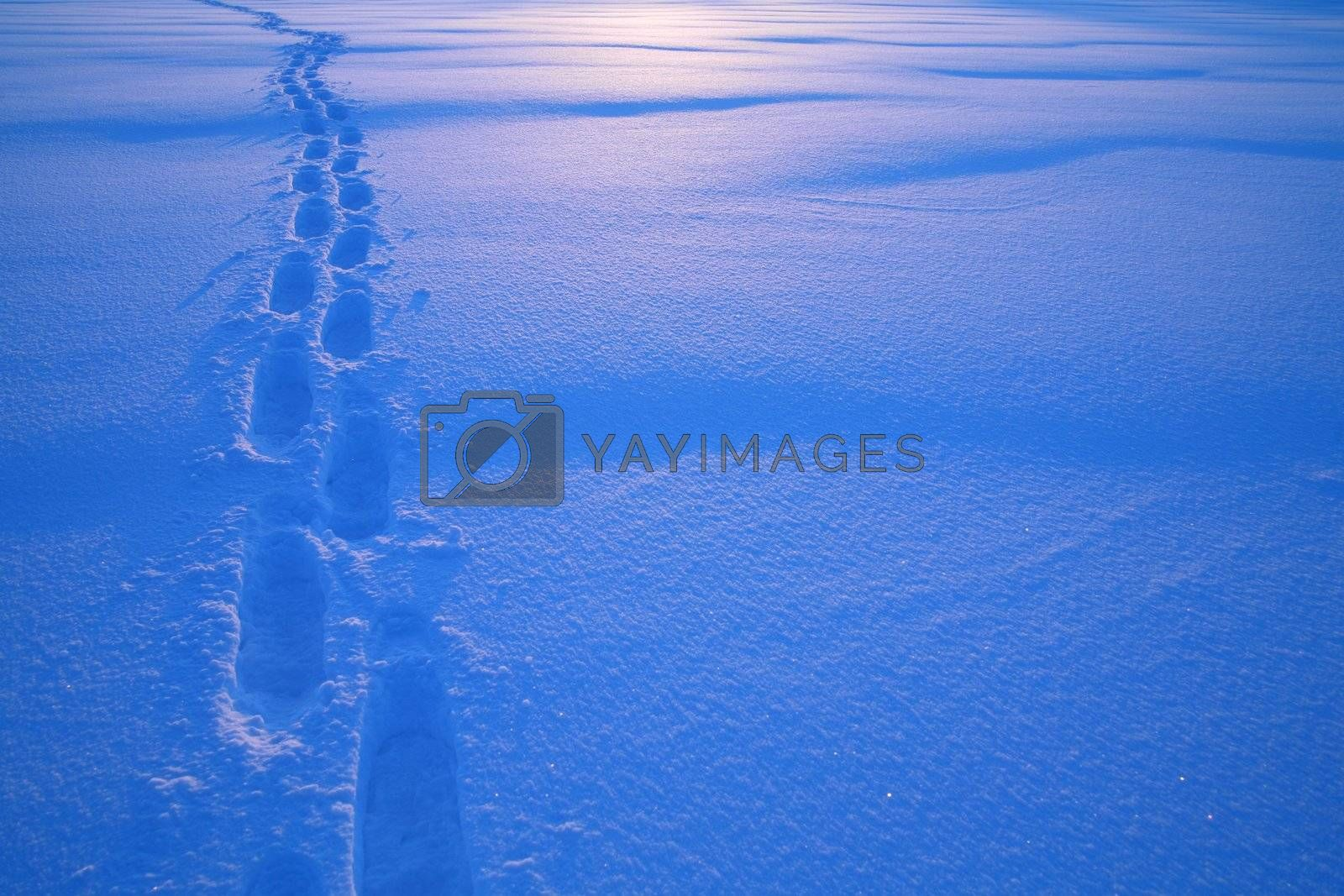 Footprints in the snow Tracks in the snow............