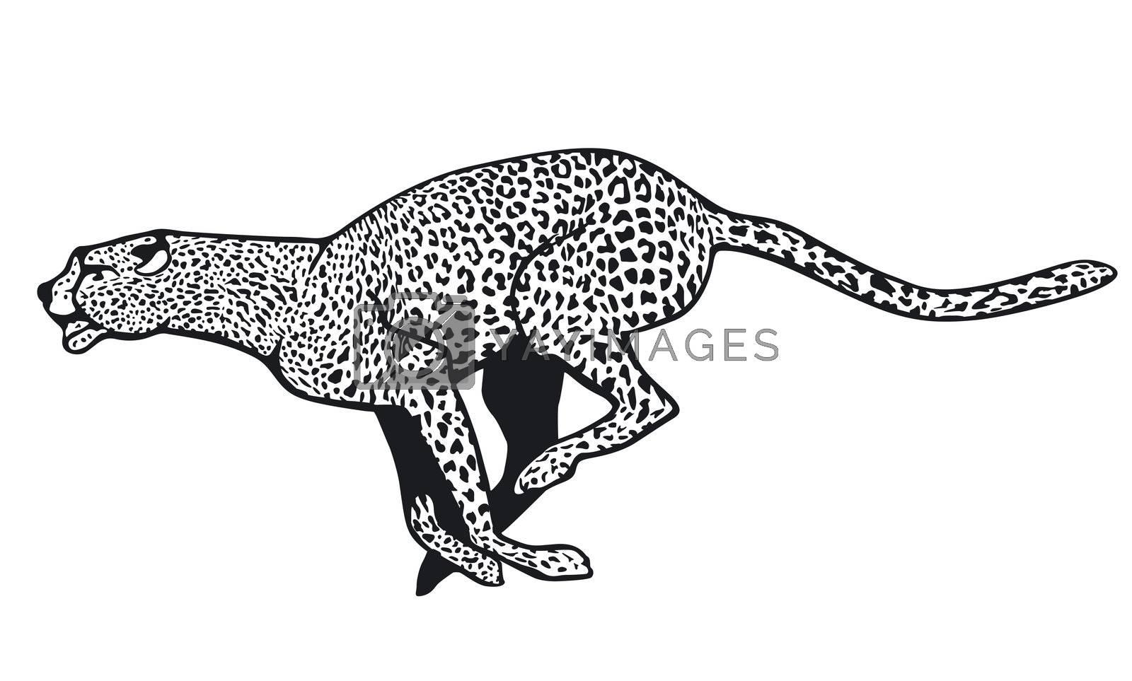 predator        cheetah,         cheetah