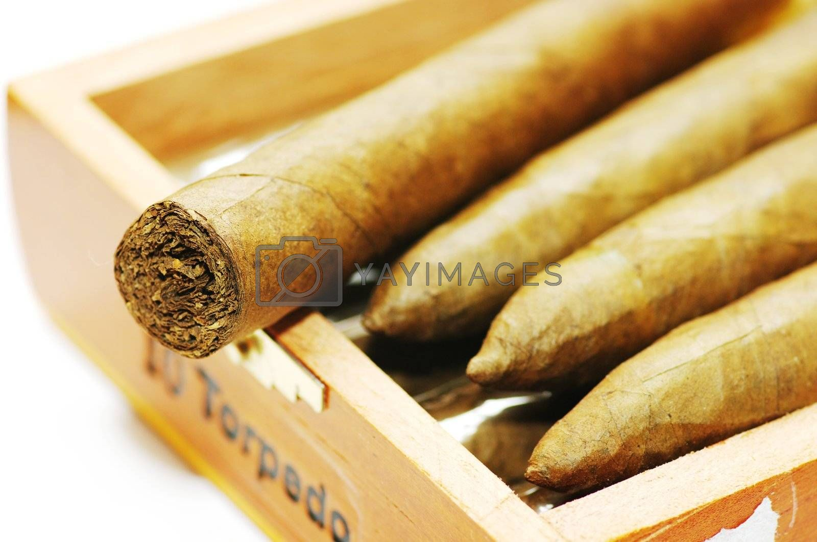 cigars are in a box. Cigars close up.