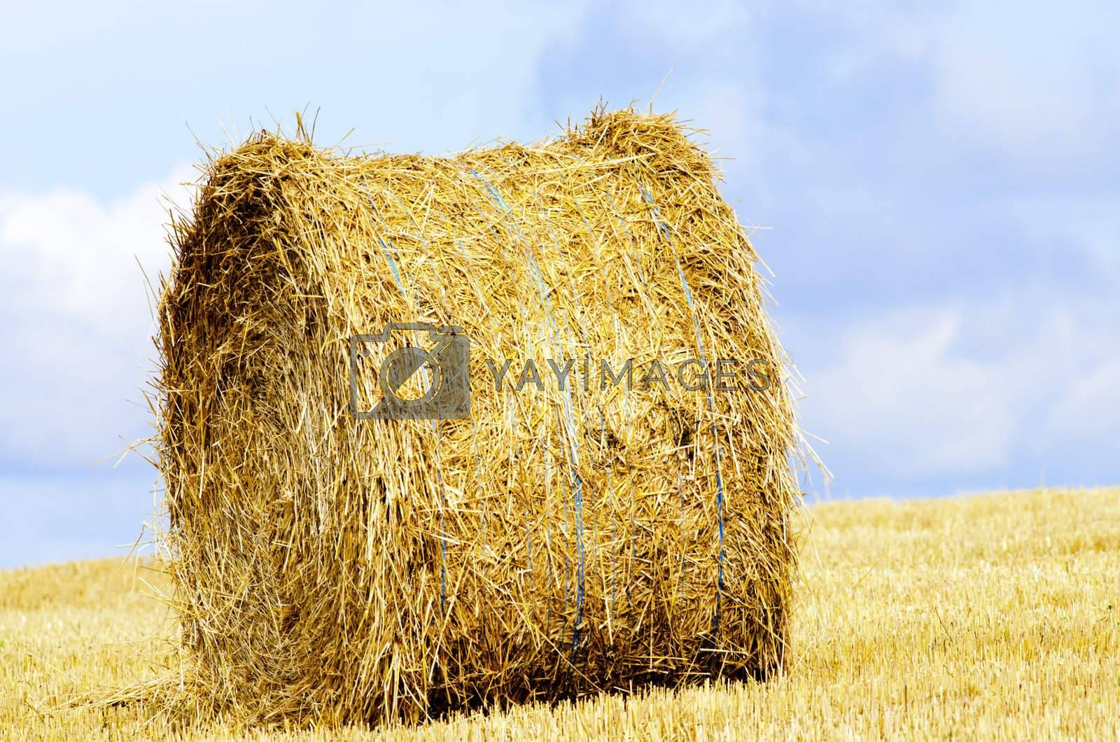 straw roll in a harvested field