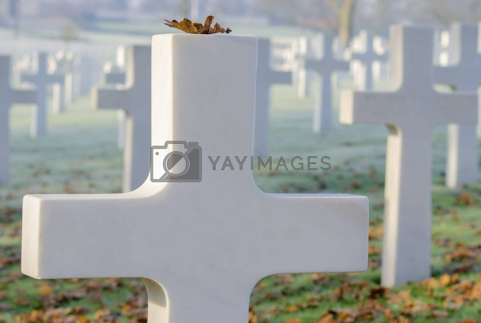 white cross in a military cemetery,