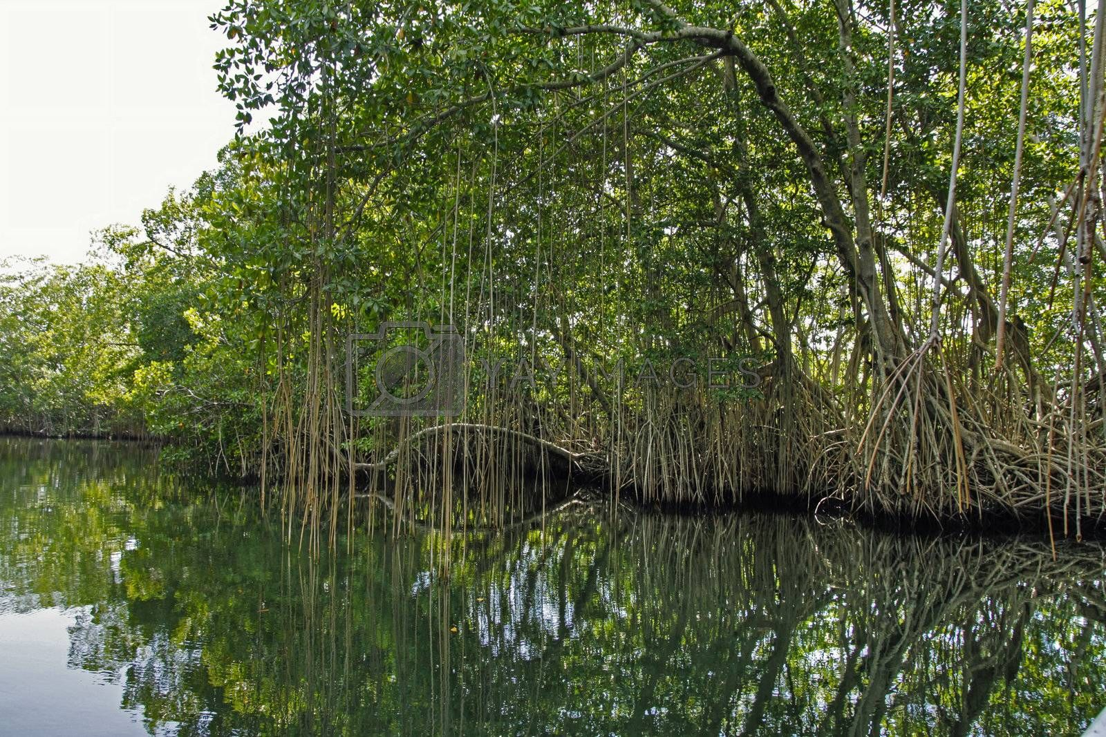 Calm tropical river edges with trees in Jamaica