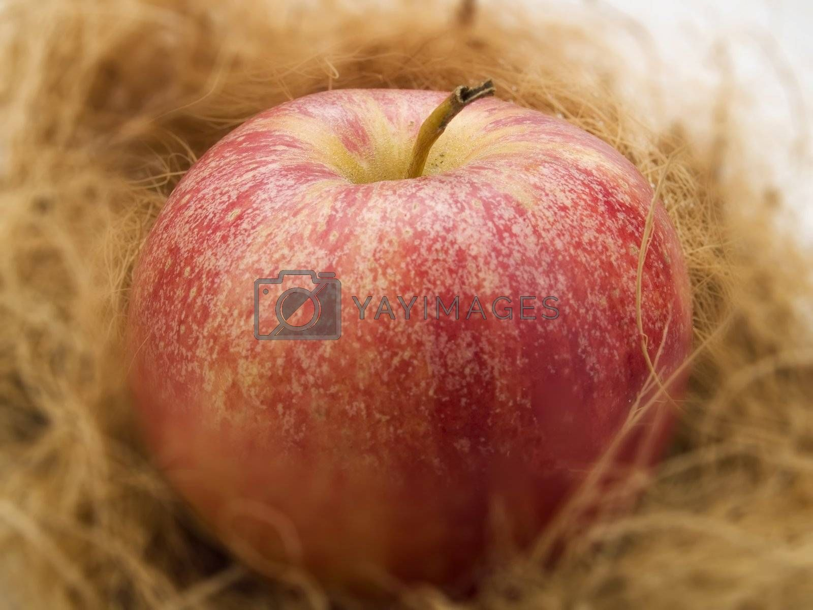 Red apple in a kitchen