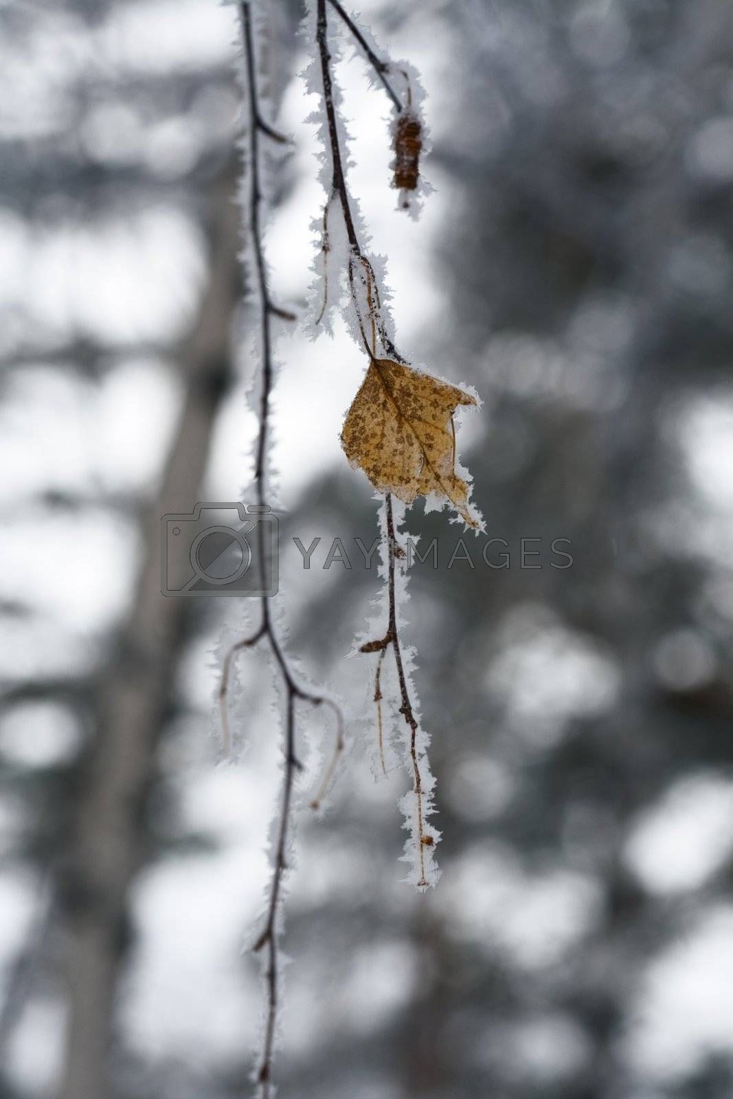 Winter abstract. by ivz