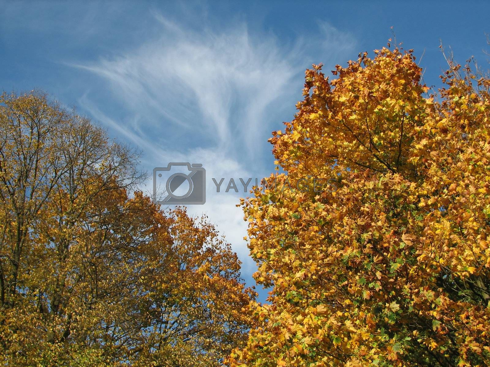Nature Background with Trees