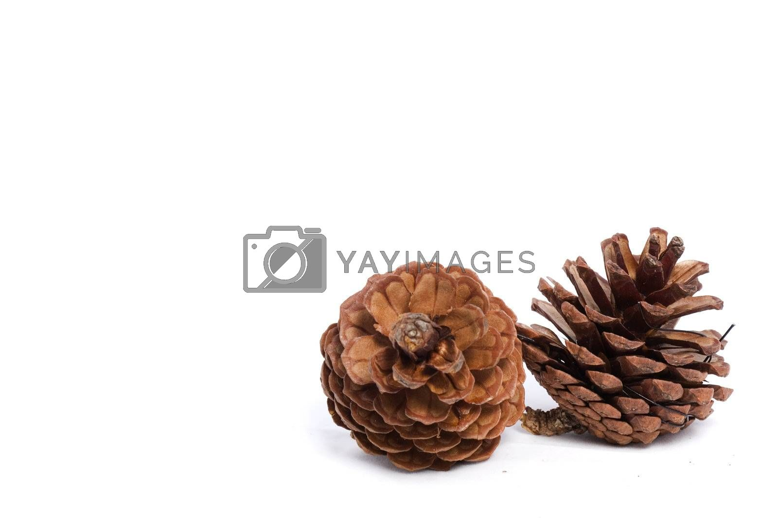 Christmas cones on a white background with copy space