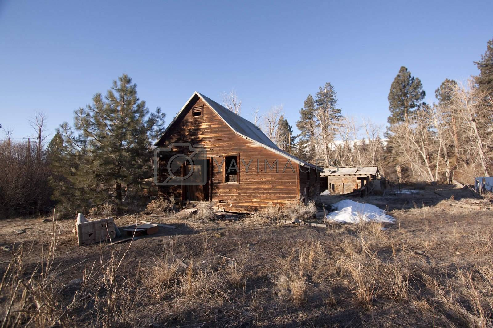 an old abandoned barn or cabin in the forest