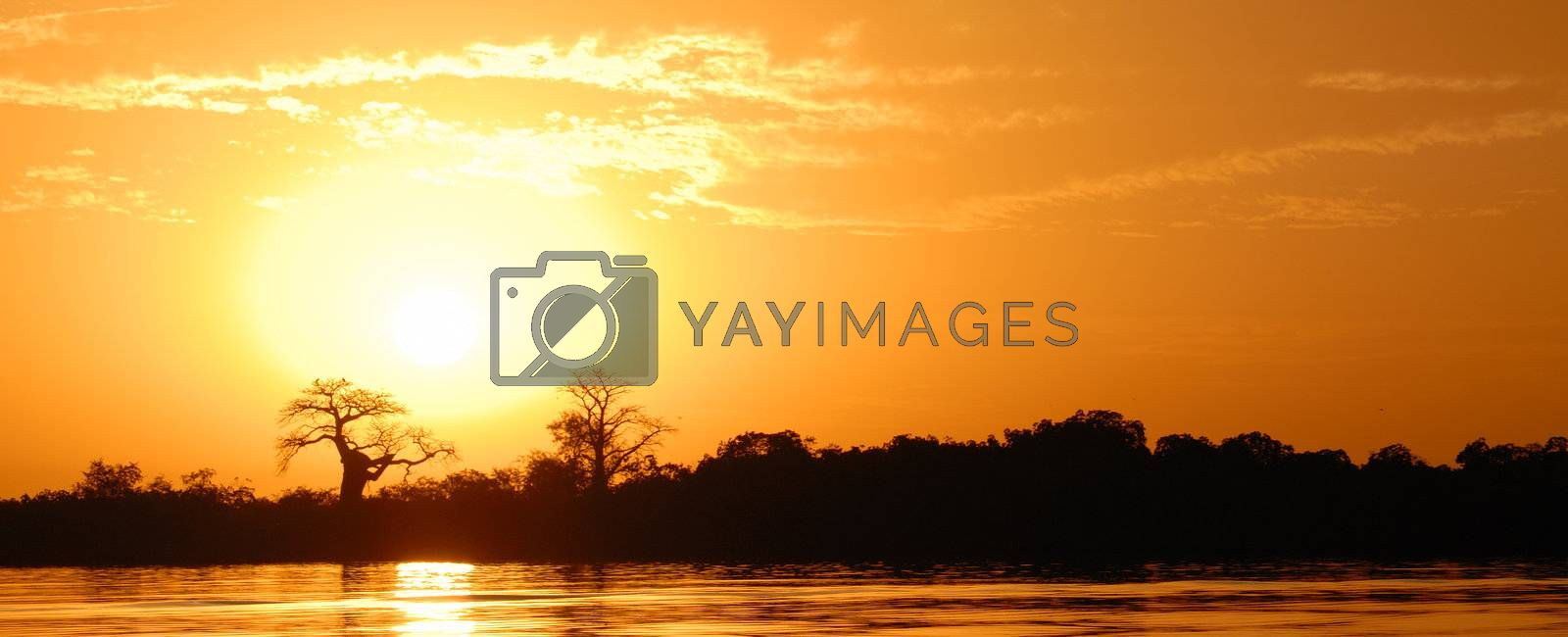 Royalty free image of African landscape by ventdusud
