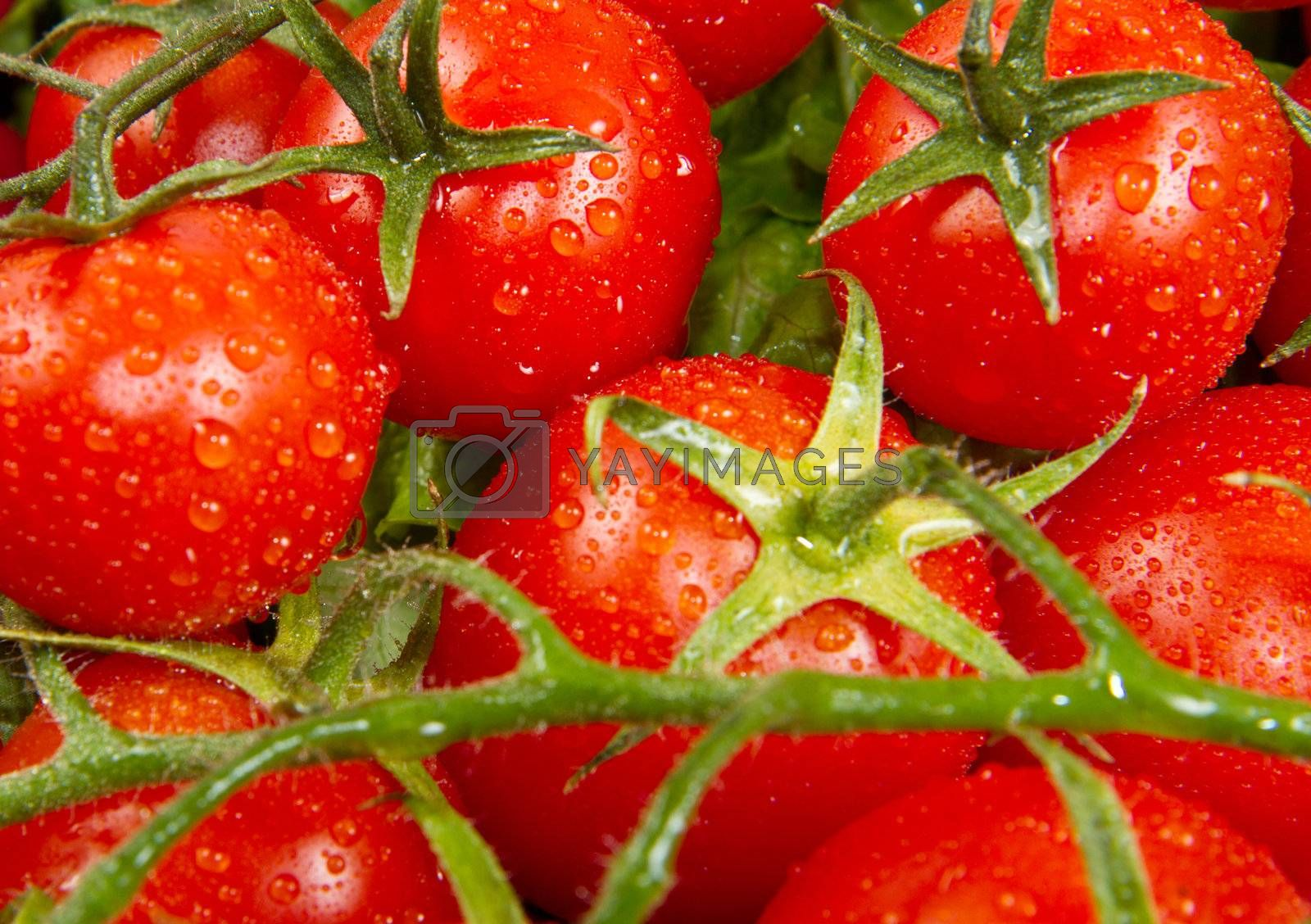 a lot of red tomatoes background