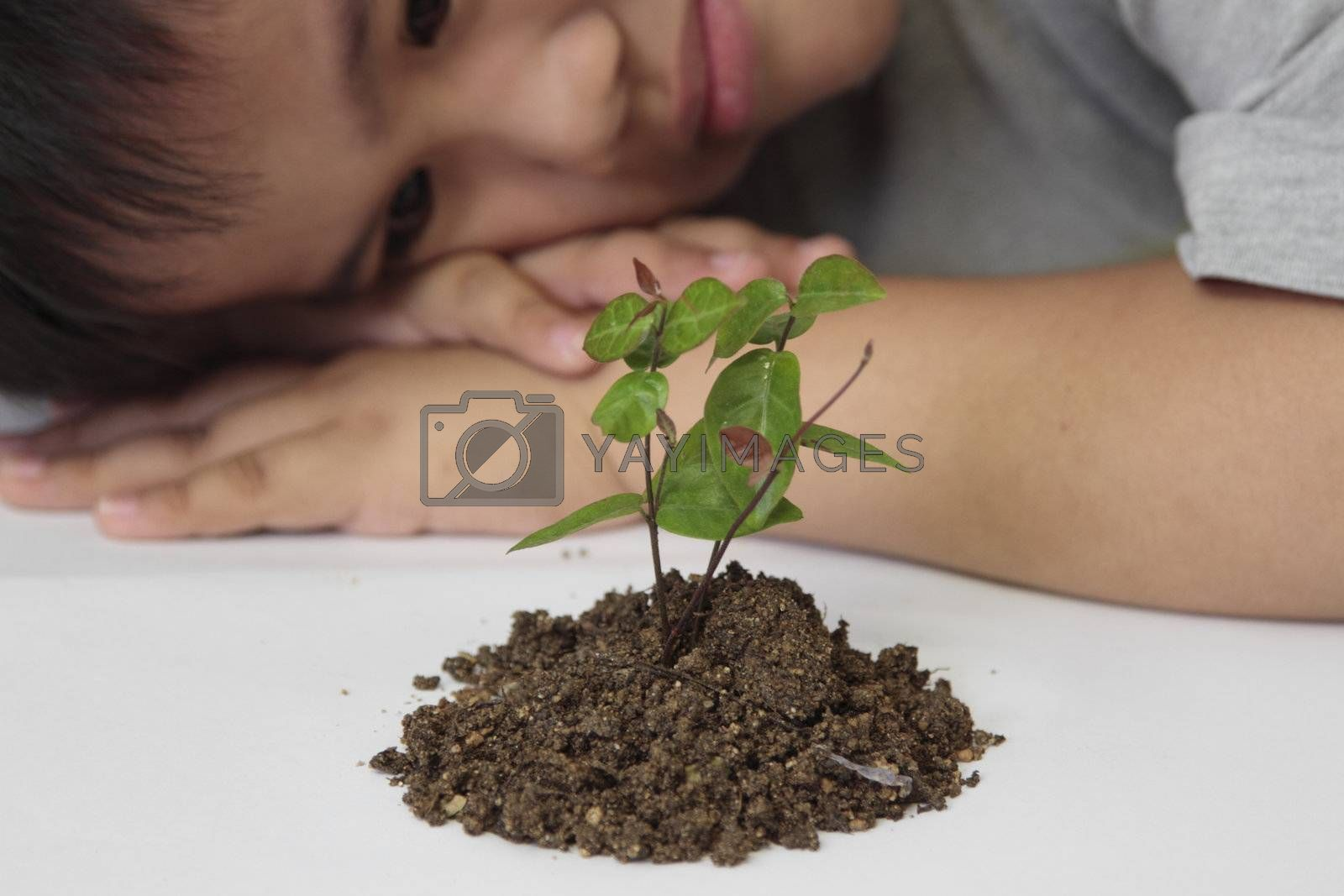Investment concept - boy watching  a seedling in a white paper.