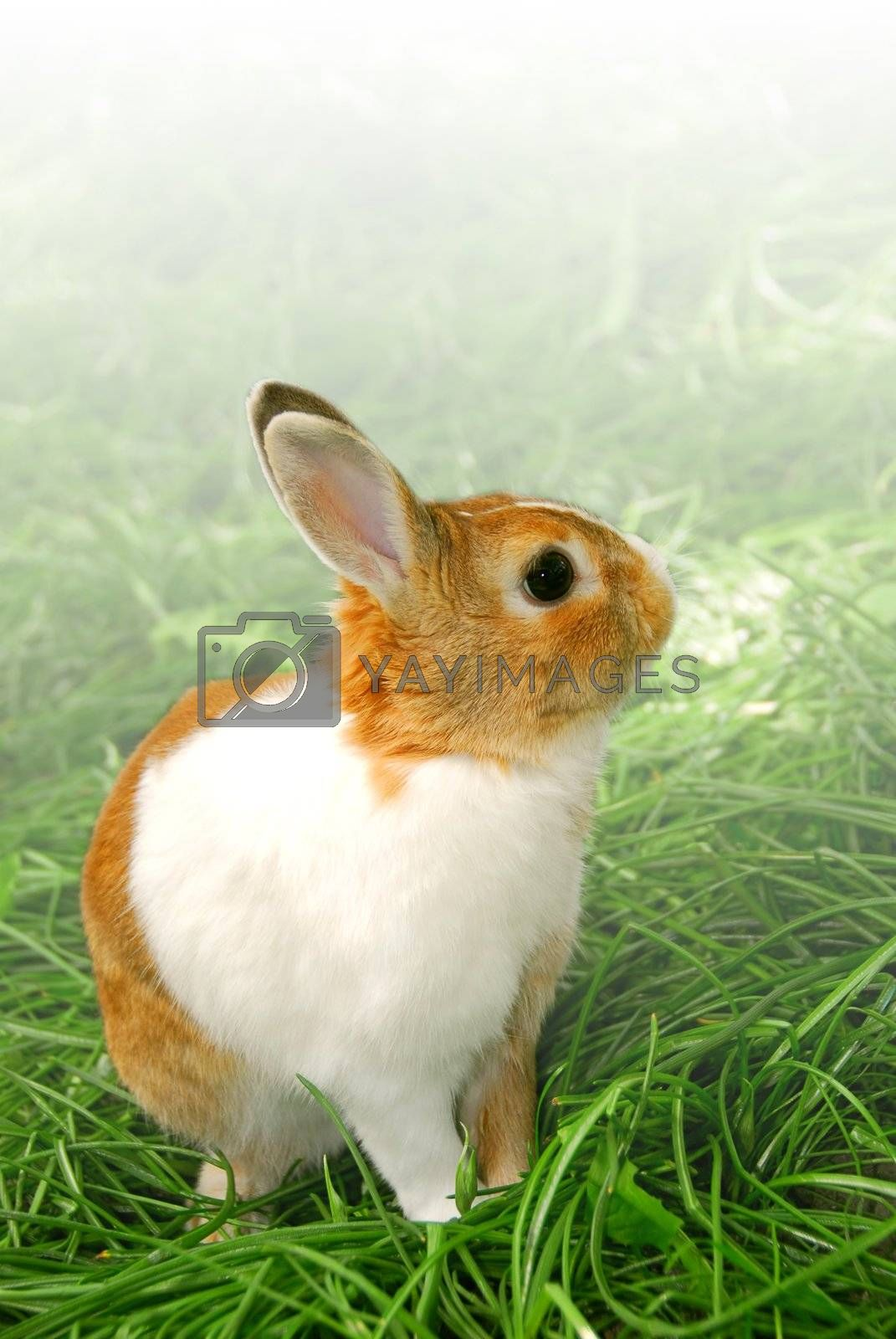 Cute easter bunny sitting on green grass outside, faded white background