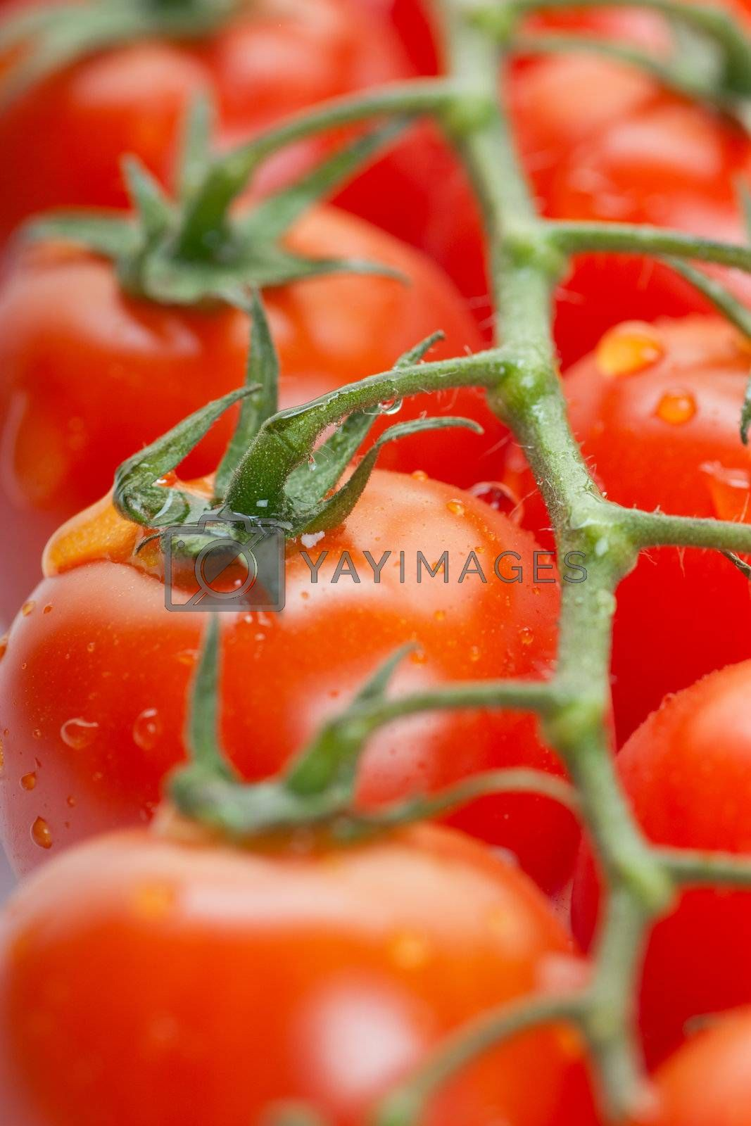 Royalty free image of Tomatoes by AGorohov
