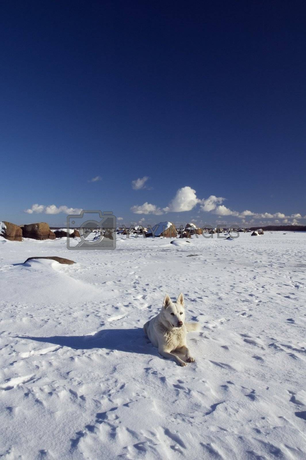 Winter landscape with a white dog