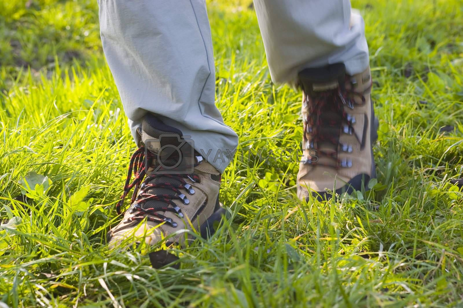 Hiking feets in green grass