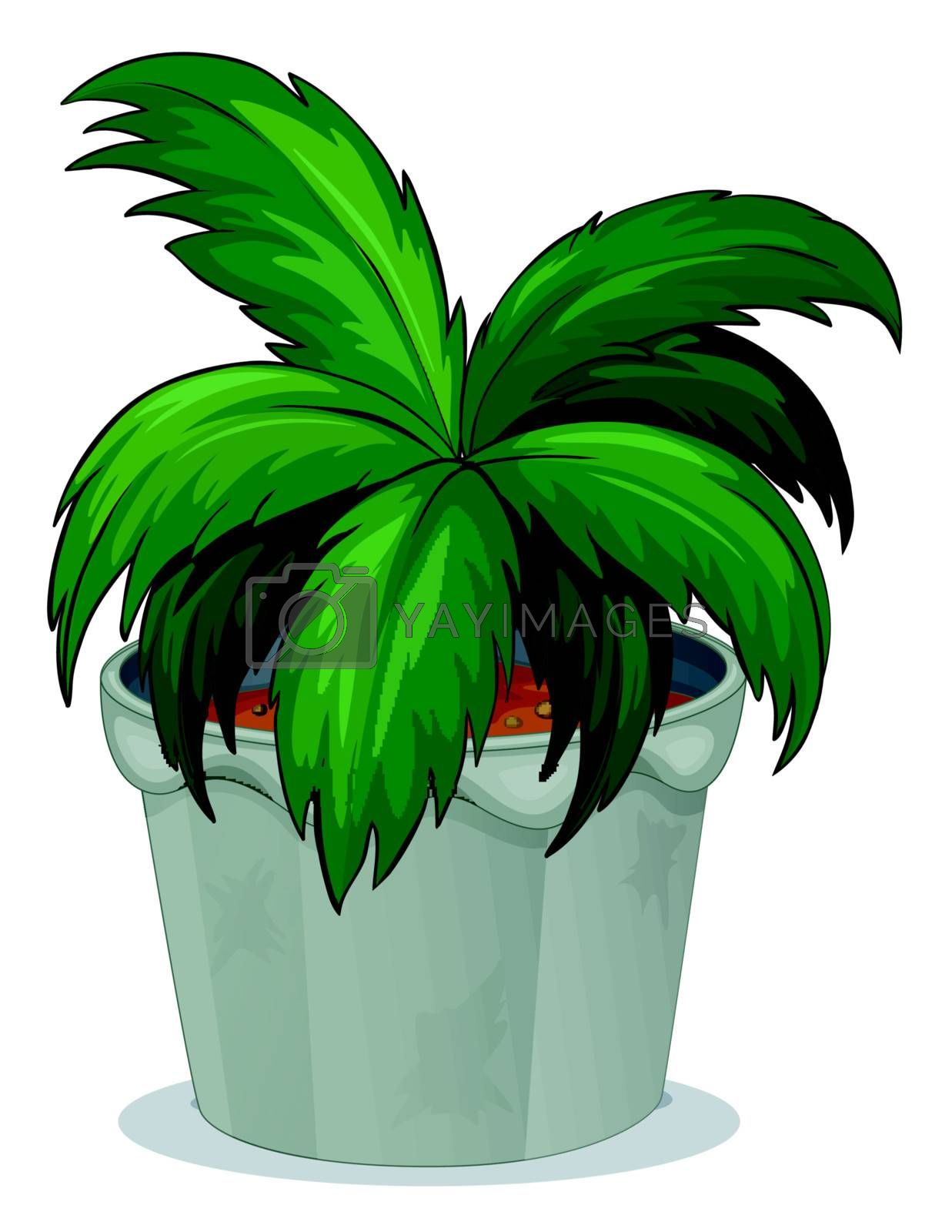 Illustration of a pot with a green leafy plant on a white background