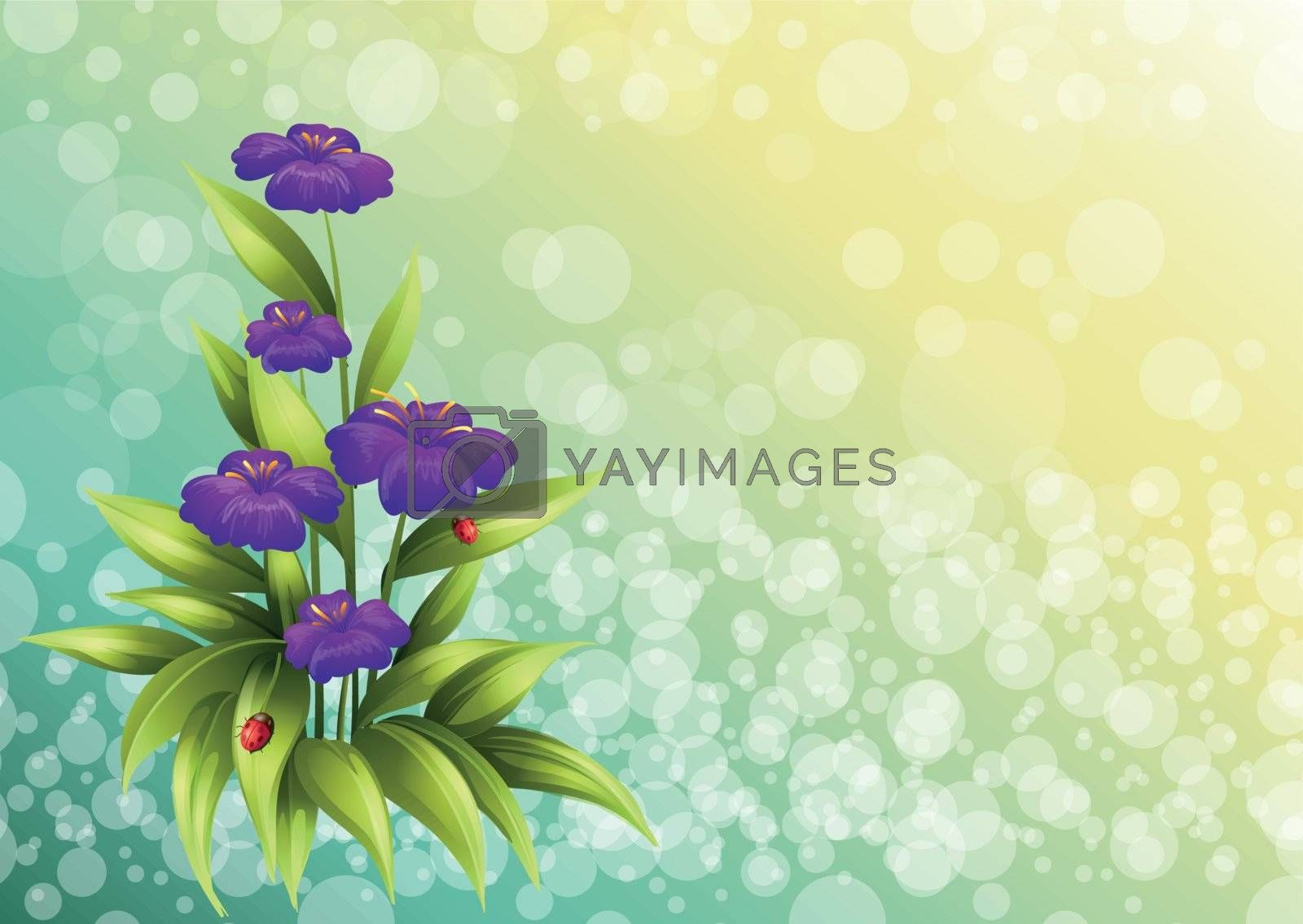 Illustration of a plant with violet flowers
