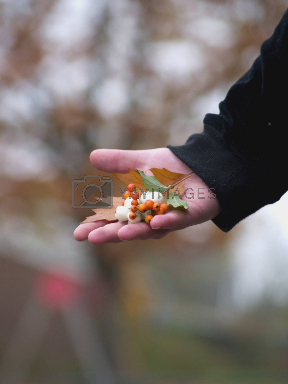 Human hand offering natural gift to you