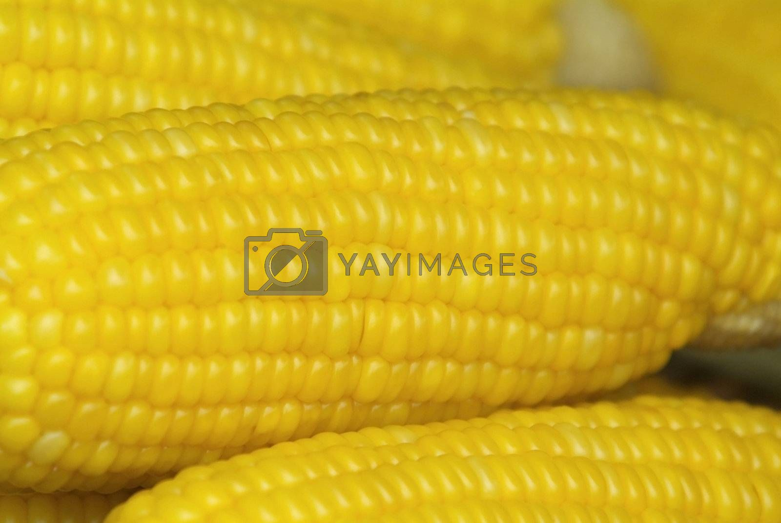 Corn on the cob abstract by epixx