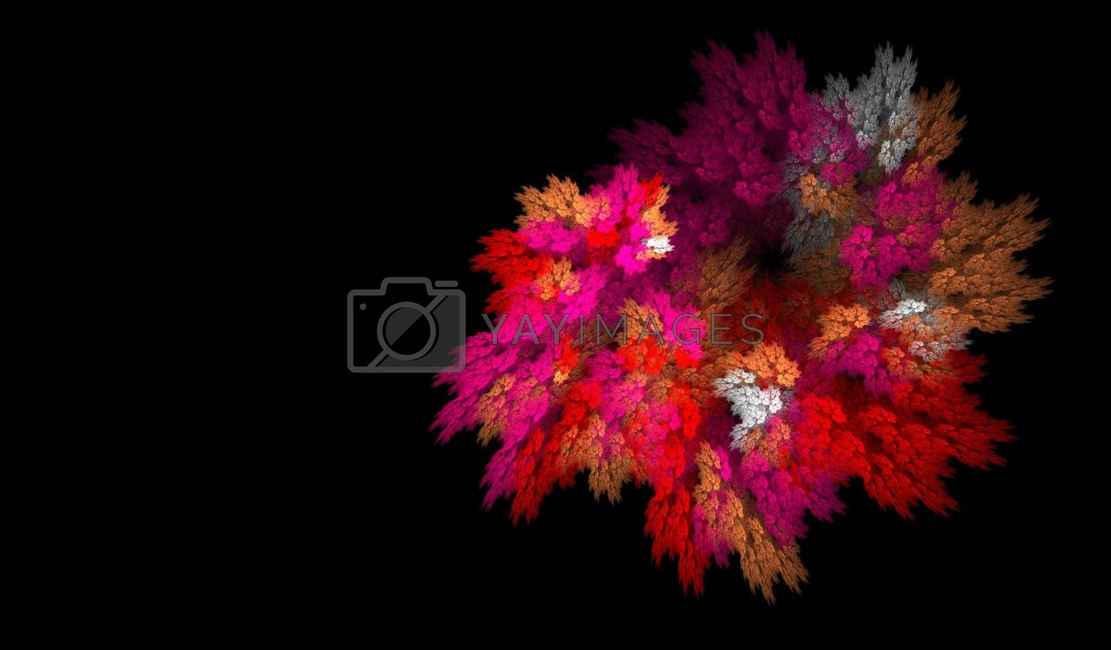 Floral explosion by hospitalera