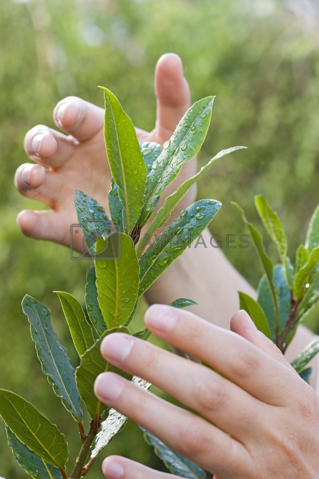 Female hands protecting a plant with waterdrops on the leaves