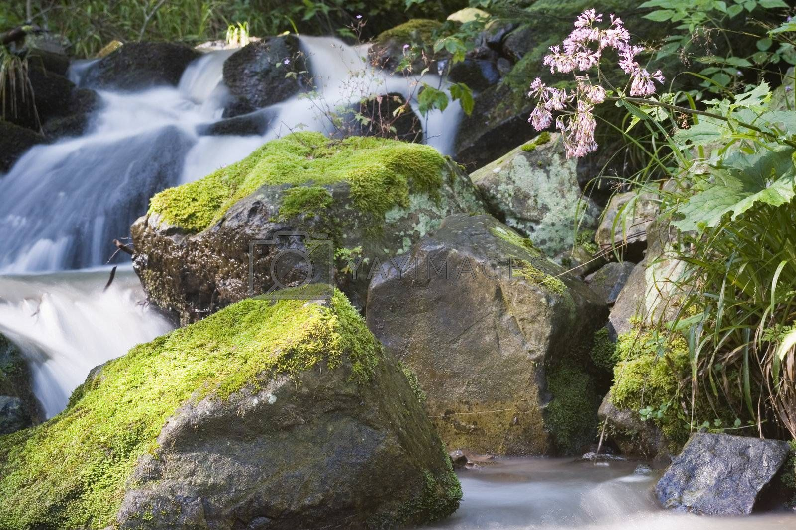 Detail of a mountain creek with a flower in the sunlight