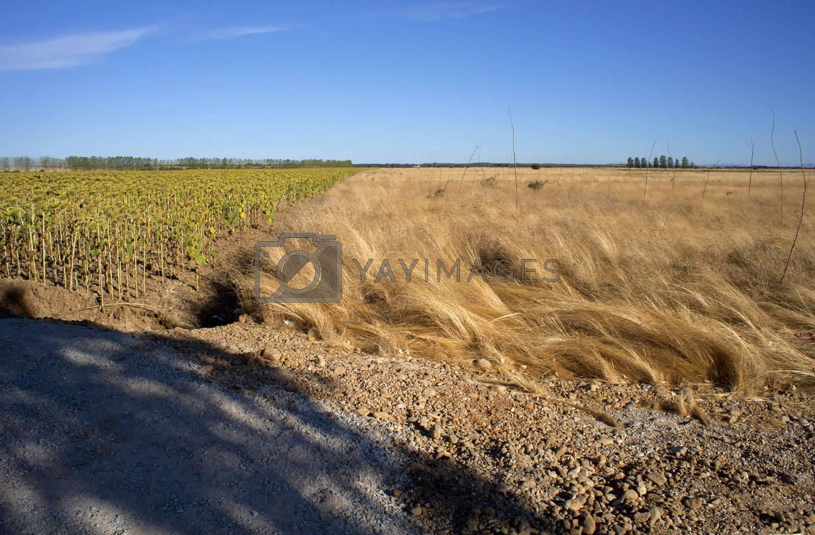 Rural scene in the spanish countryside
