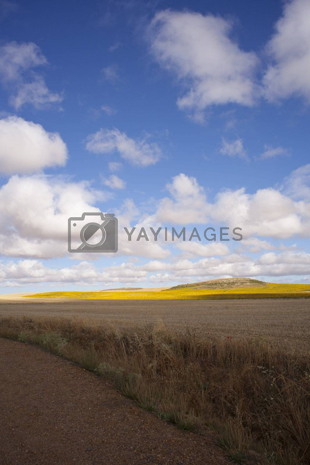 View of Spanish countryside in the summer