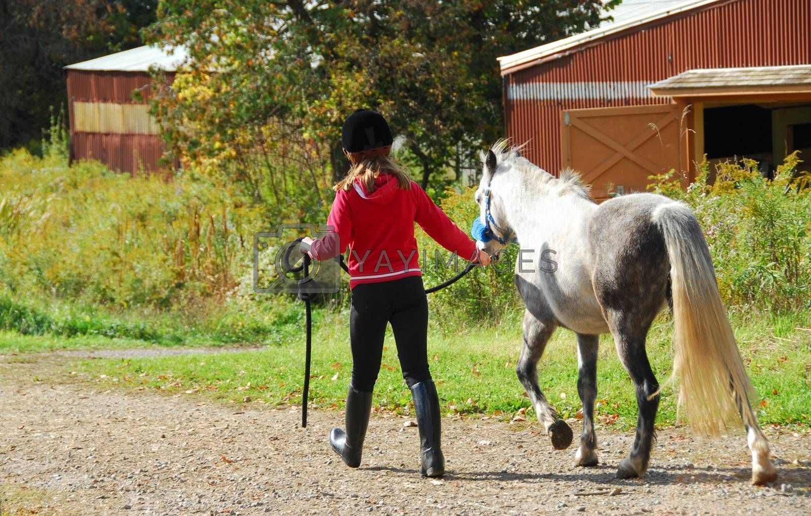 Young girl leading a white pony to stable