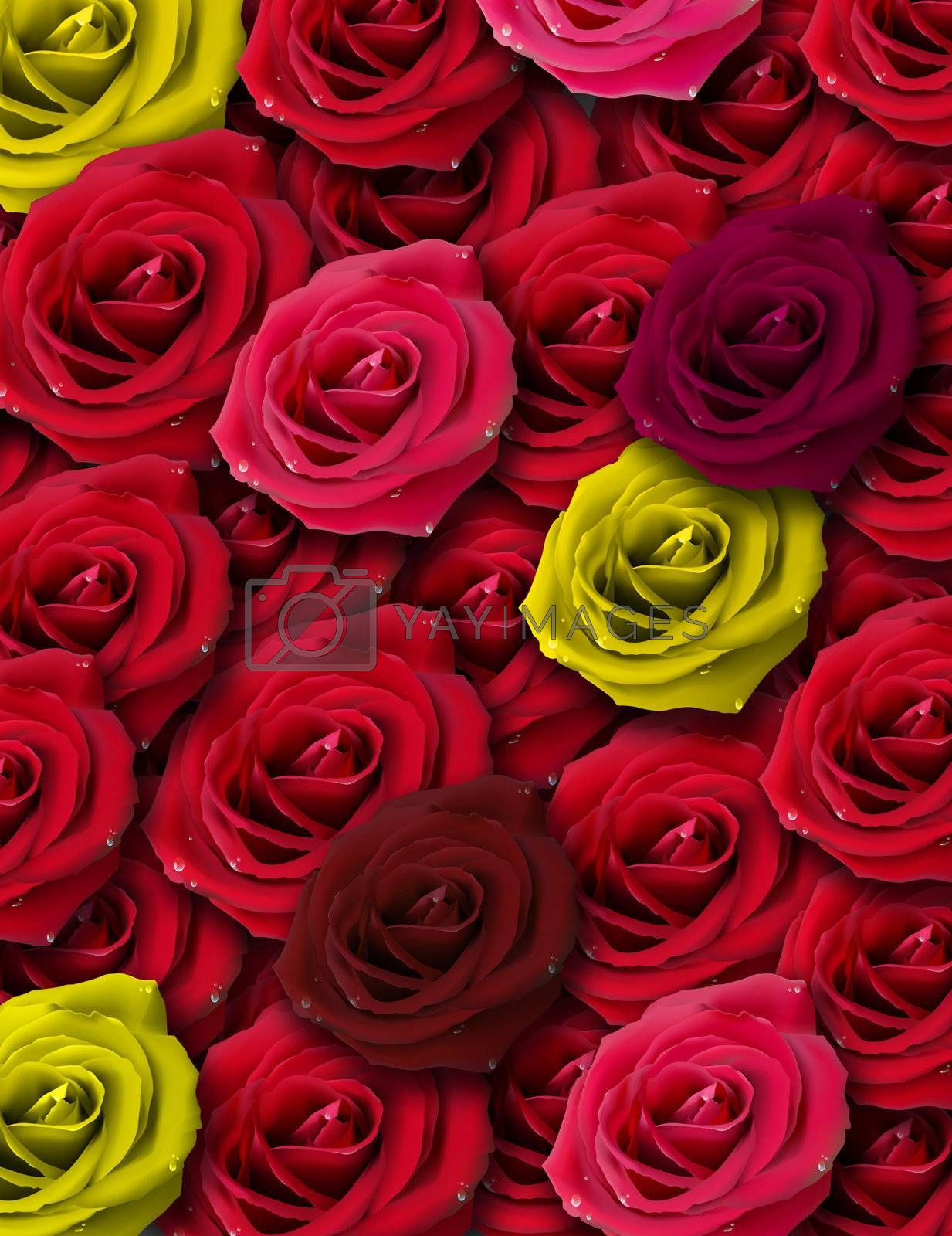 abstract illustration, yellow and red roses drops