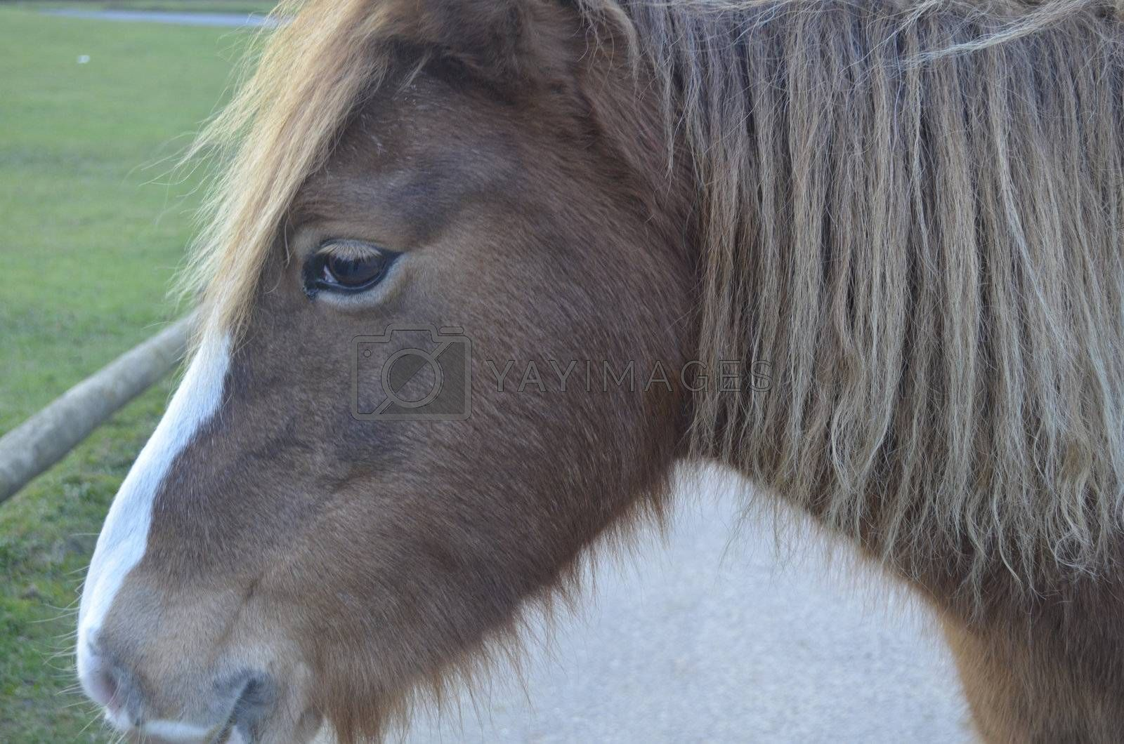 Close up of brown horse with thoughtful face