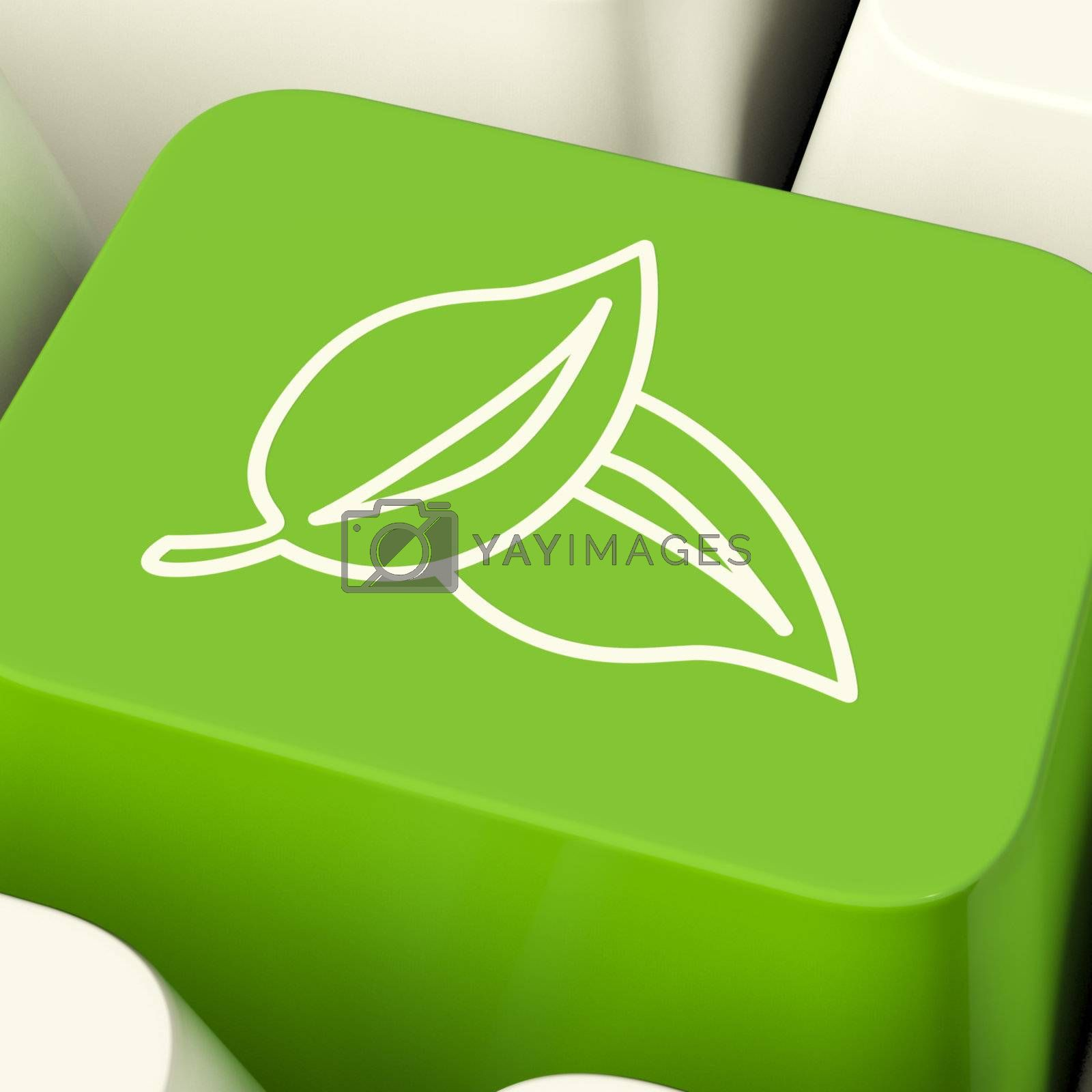 Leaves Icon Computer Key In Green Showing Recycling And Eco Frie by stuartmiles