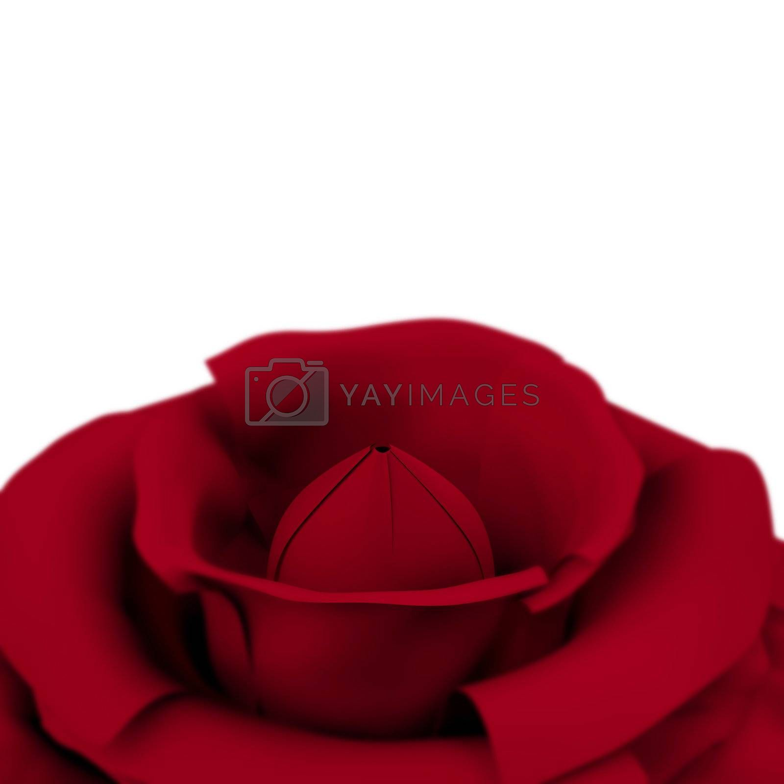 Rose With White Copyspace Background Showing Love Valentines And Romances