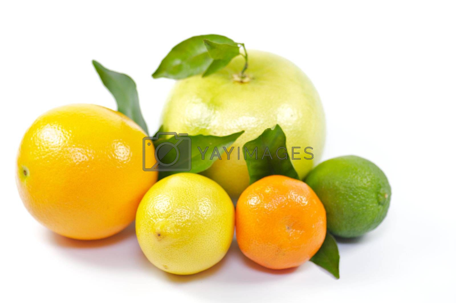 Citron mix from orange, lemon, pummel, lime and tangerine