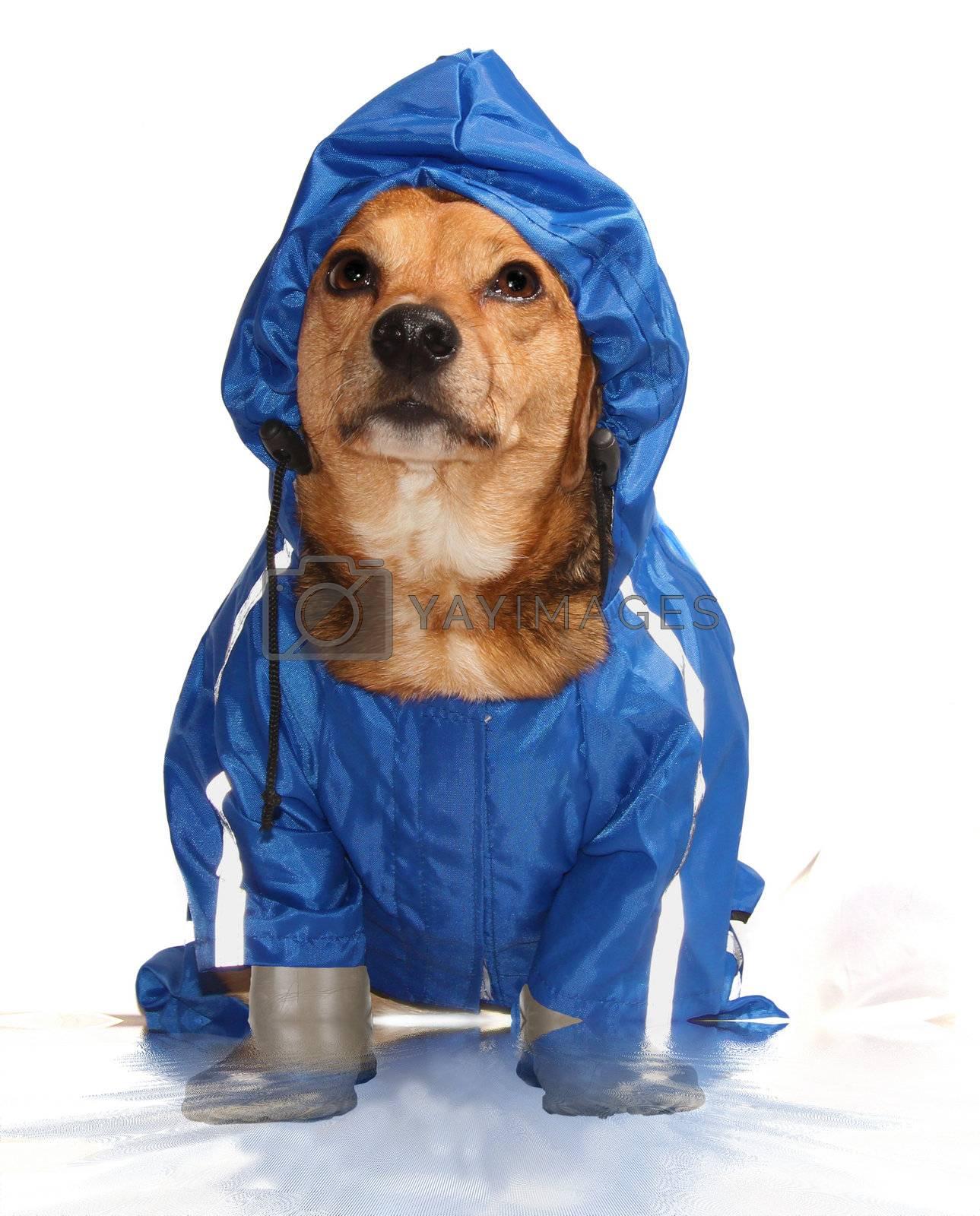 the blue rain dog in the bathroom