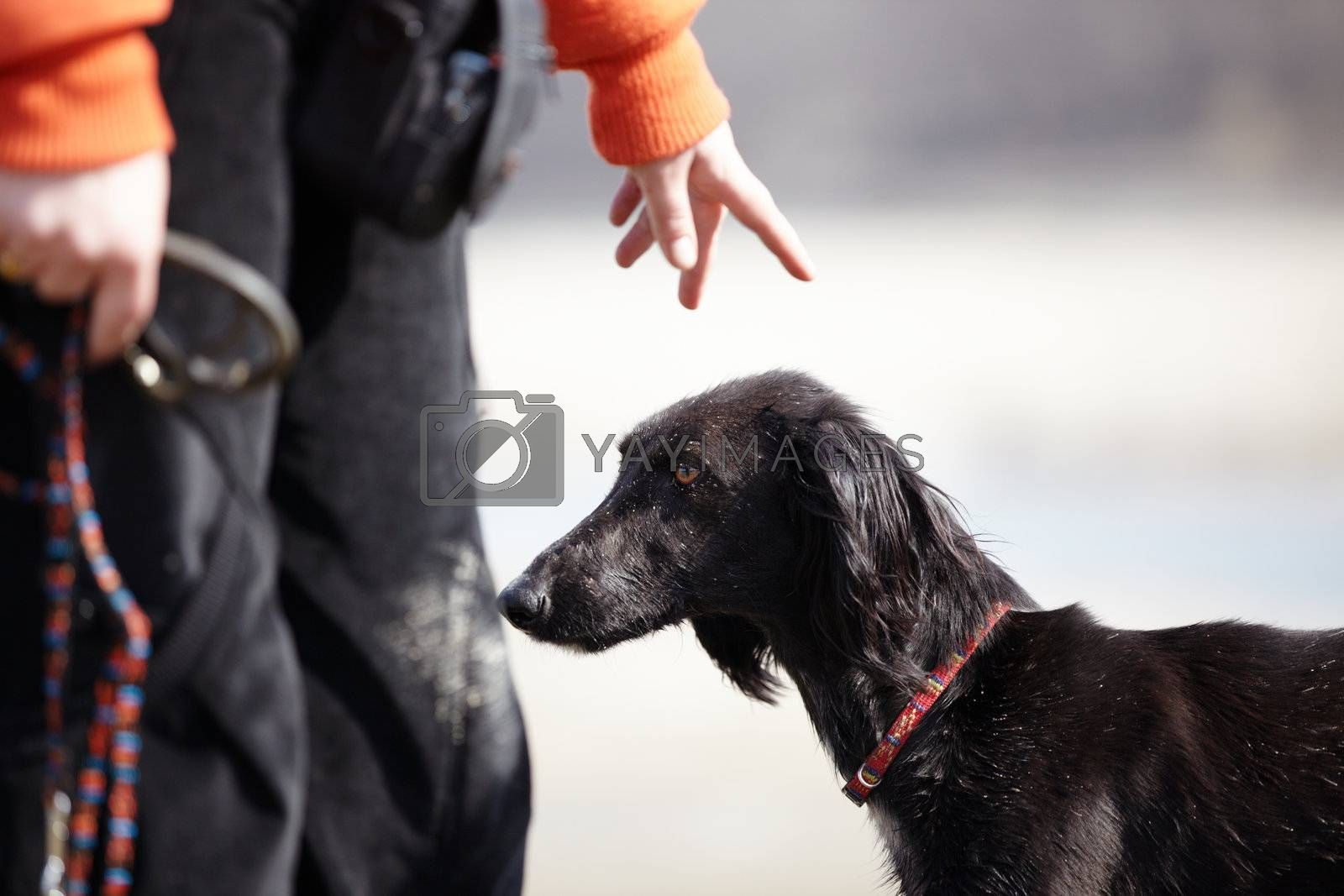 Turkmenian greyhound and trainer outdoors. Natural light and colors