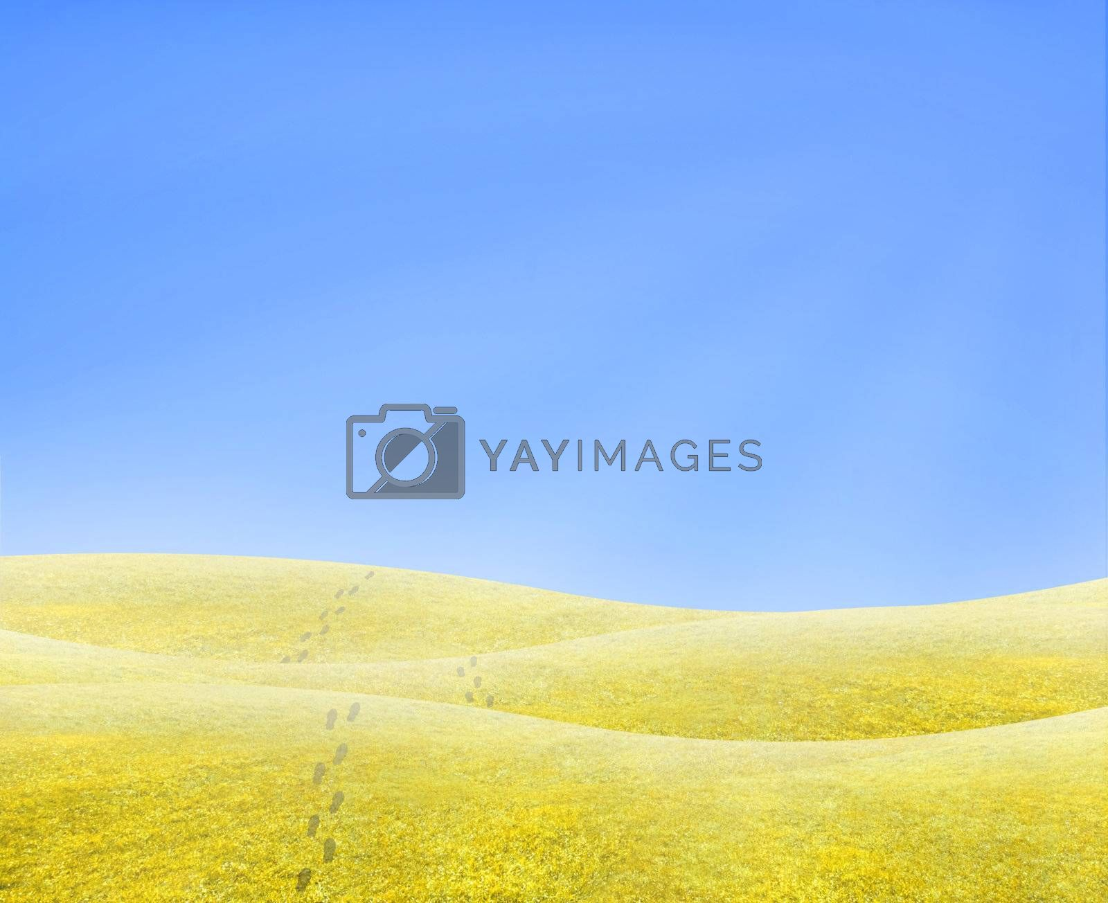 Simple tranquil beautiful horizon with a surreal yellow grass and footsteps walking into nothing.