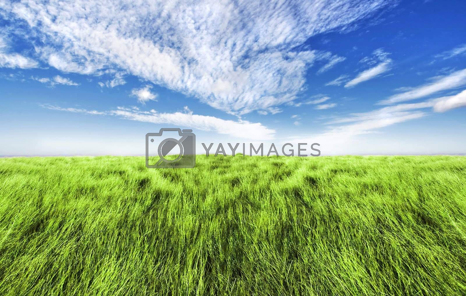 Beautiful altitude horizon with blue cloudy sky and green high grass.