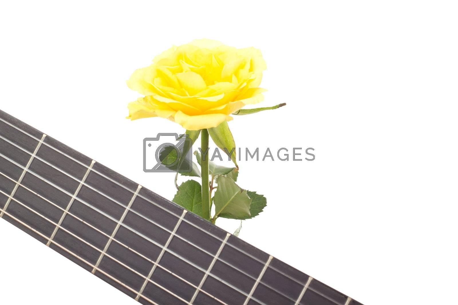 Beautiful rose with guitar