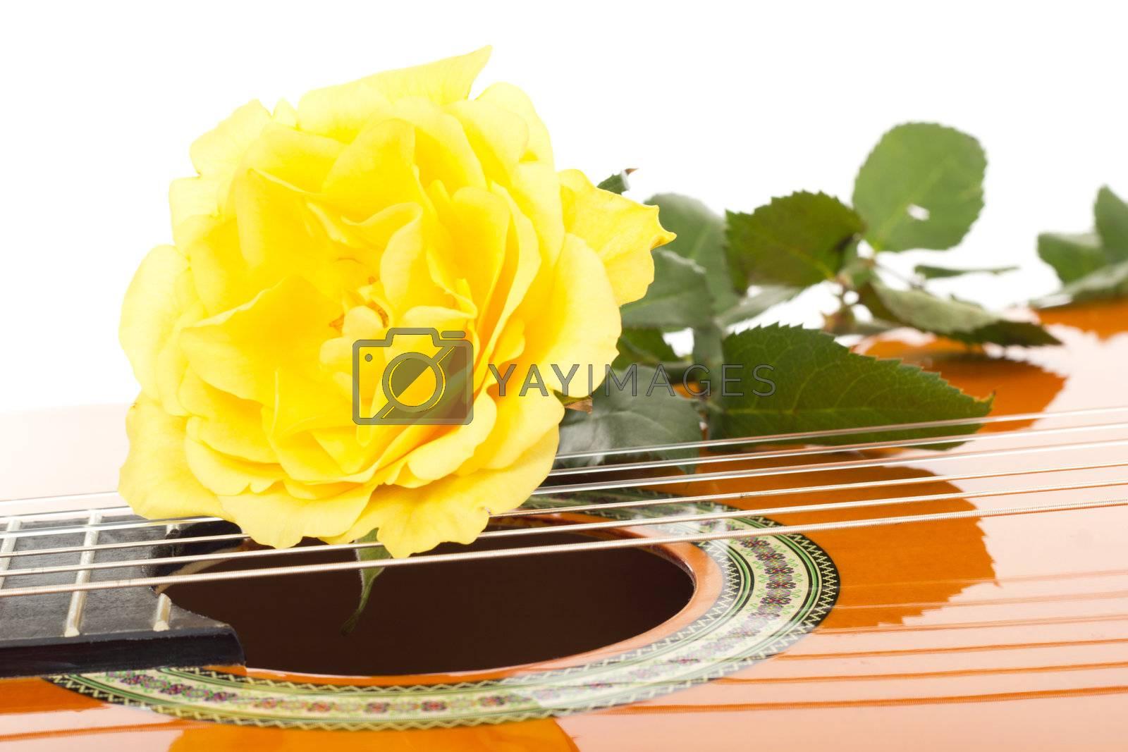 Beautiful rose on guitar