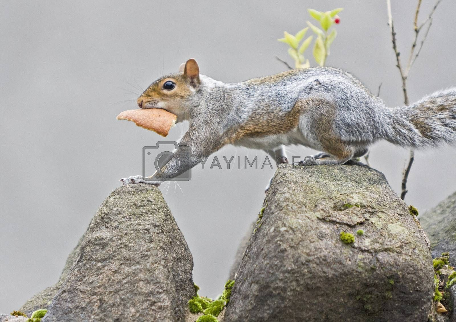 squirrel with a piece of bread on top of a wall