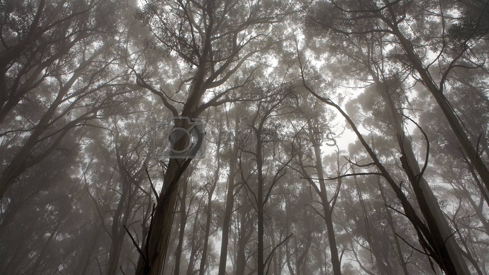 A forrest and a view of tree tops, monochrome