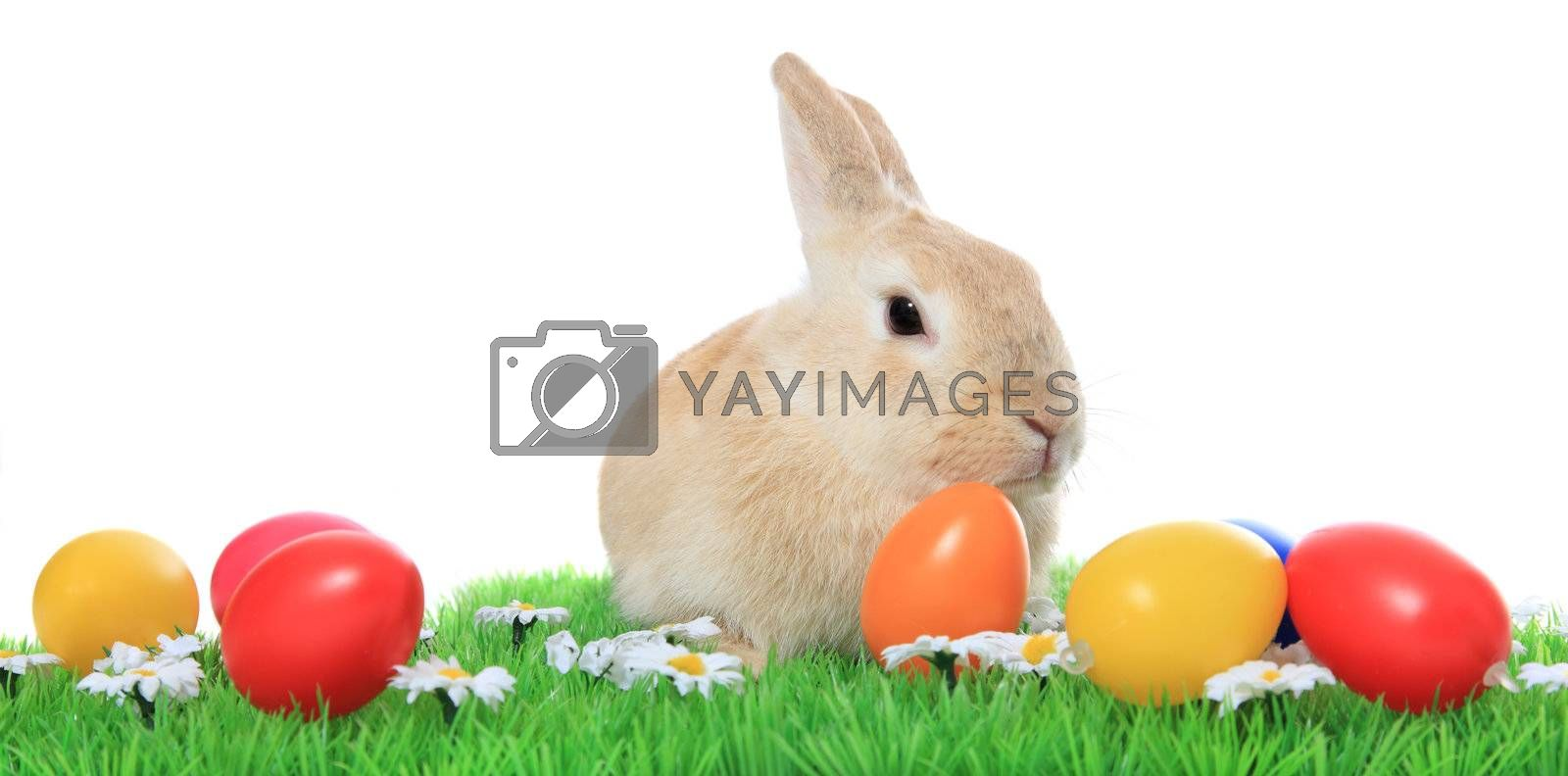 Cute little easter bunny on green meadow with colored eggs. All on white background.