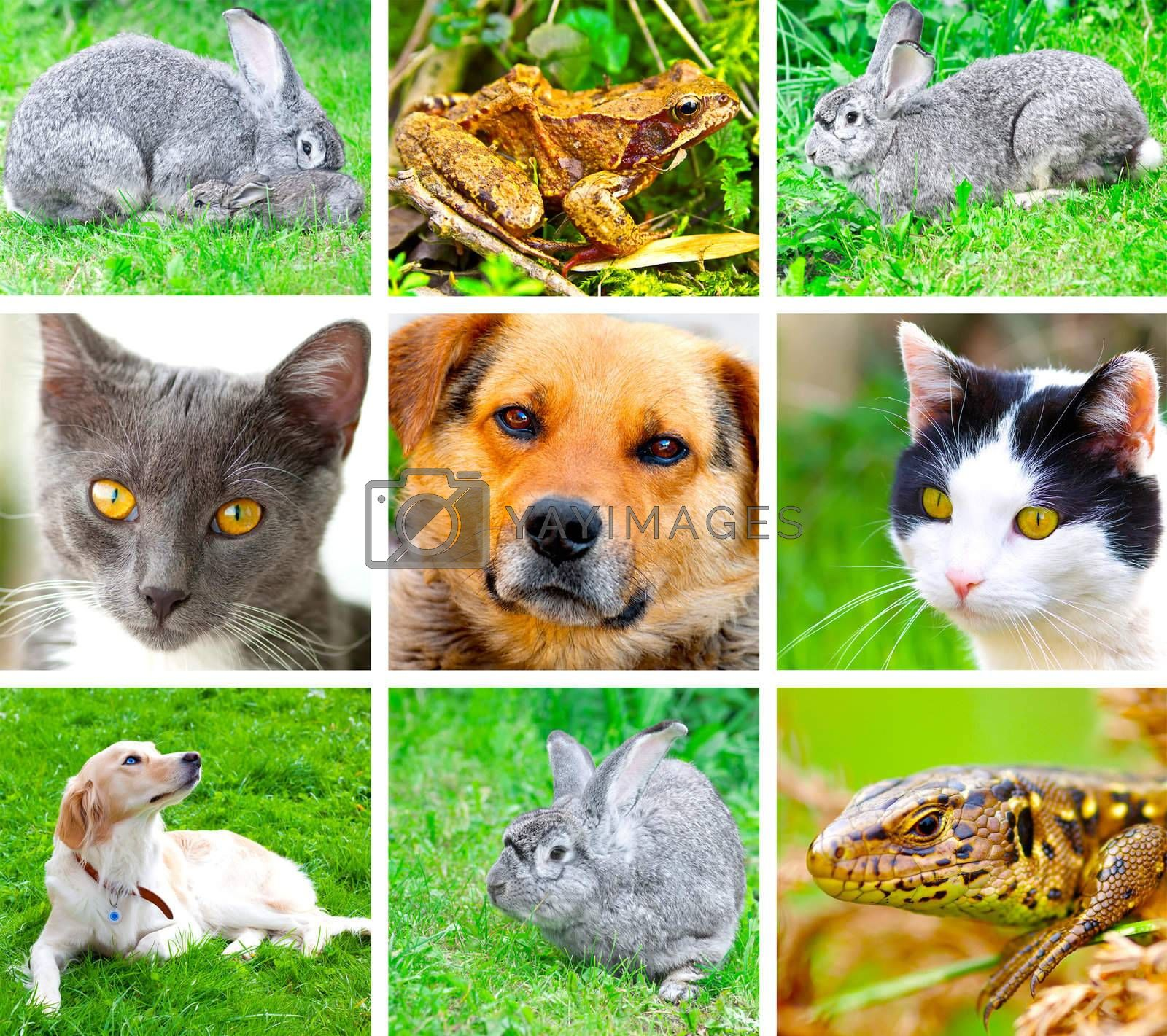 Collage of animals images. ( cat, dog, lizard, frog, rabbit )