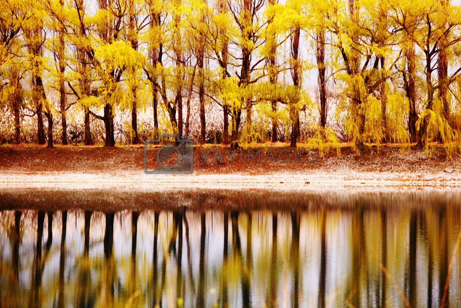 tree reflection in spring mountain lake
