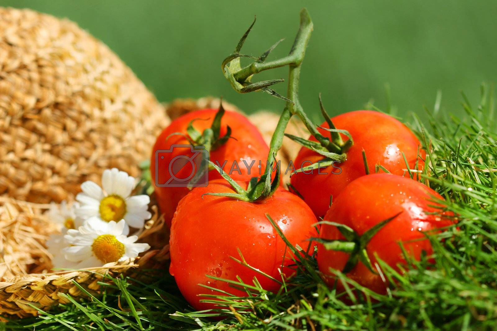 Summer tomatoes with straw hat
