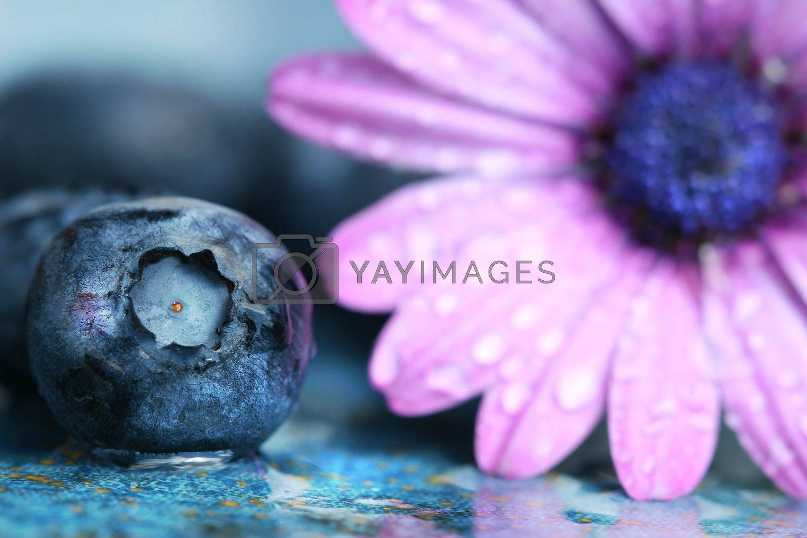 Macro shot of a blueberry and daisy