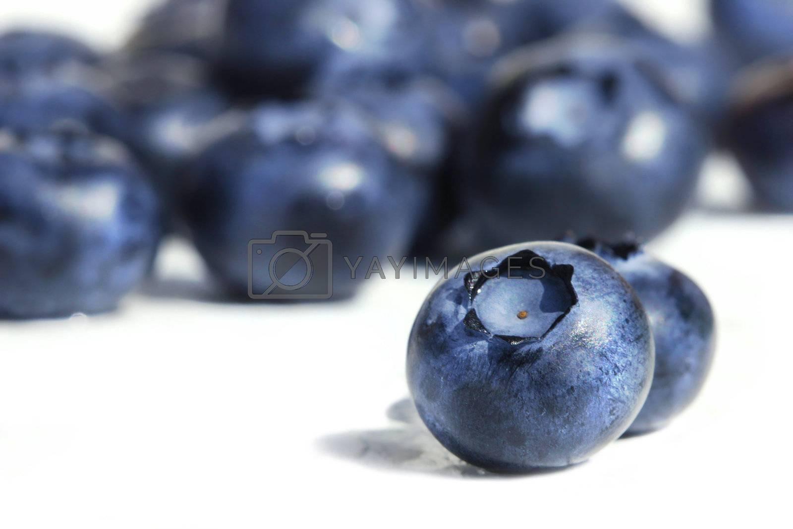 Big blueberries on white background