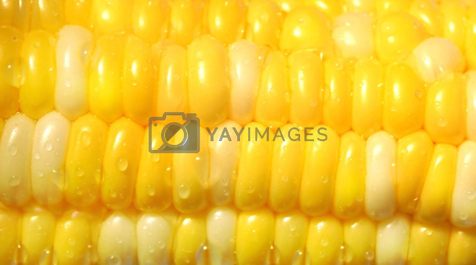 Macro shot of a corn