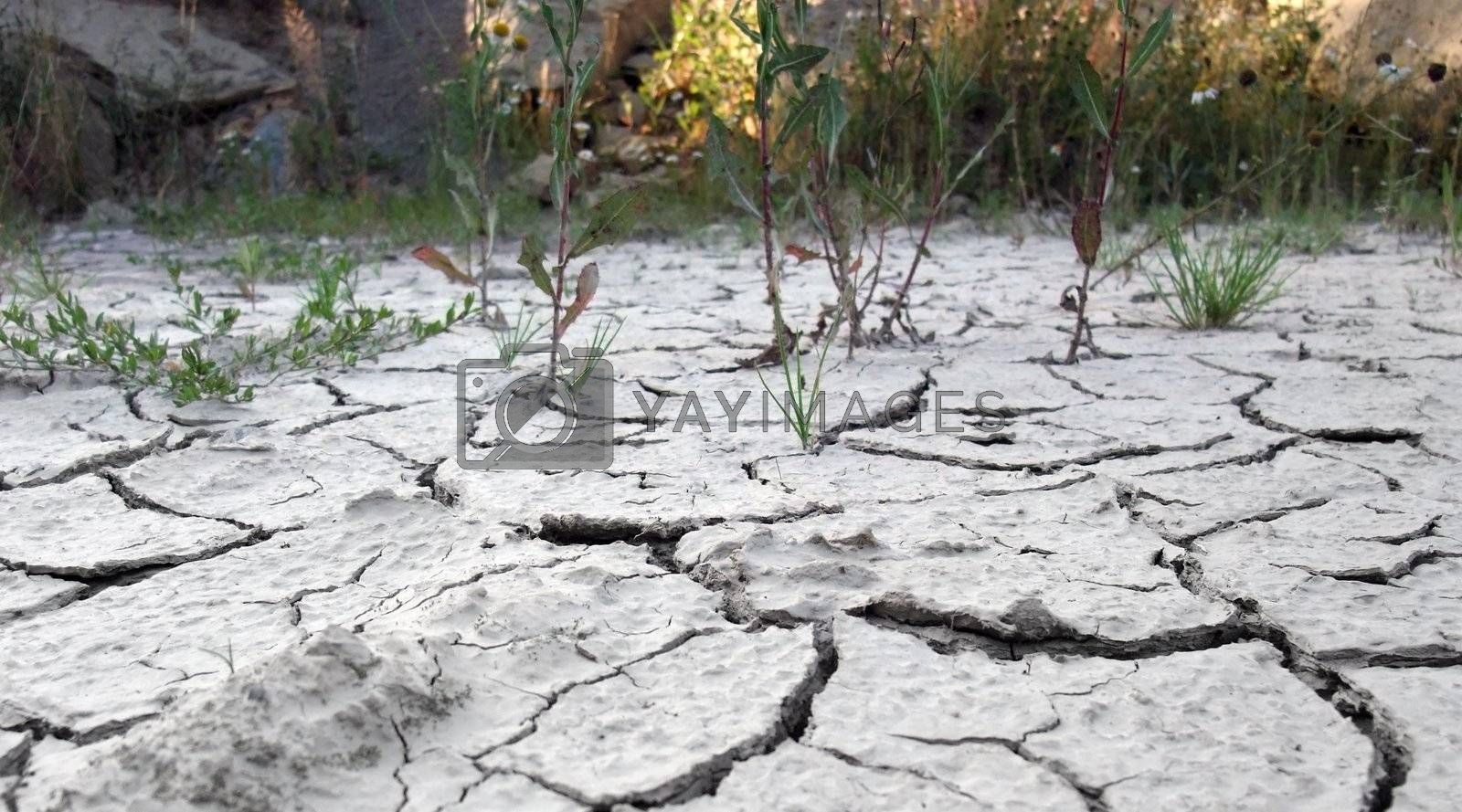 low angle photographie showing the border of a dry cracked soil area with distant plants